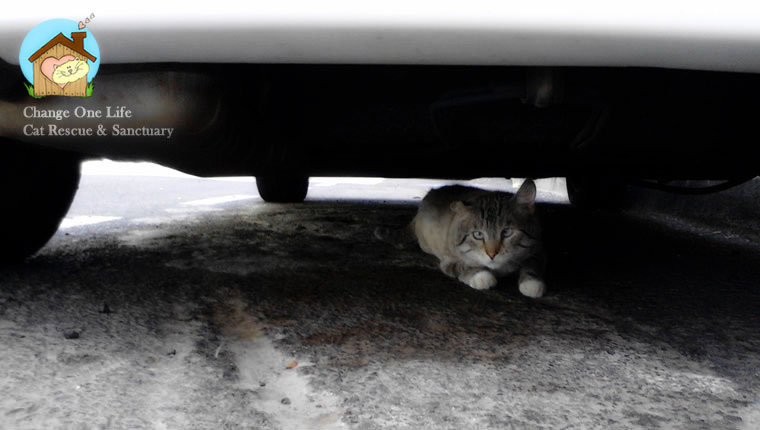 stray cat under car