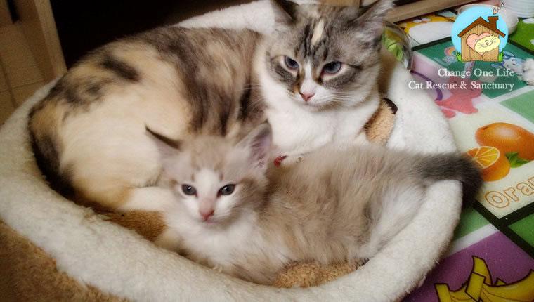 cat and kitten cuddling