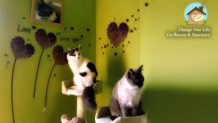 cats in sanctuary room
