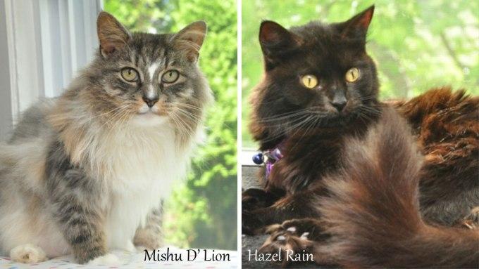 Mishu D' Lion & Hazel Rain